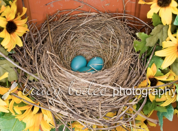 Robins-004-Nest-Eggs-P-B