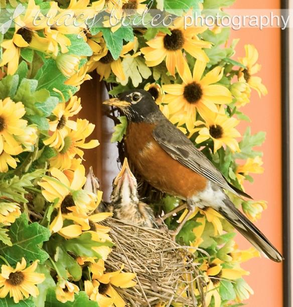 Robins2wks-050-P
