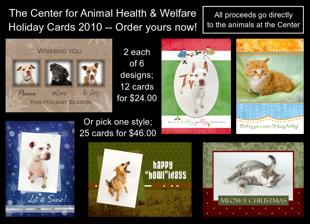 the center for animal health amp welfare our cats - 1000×724