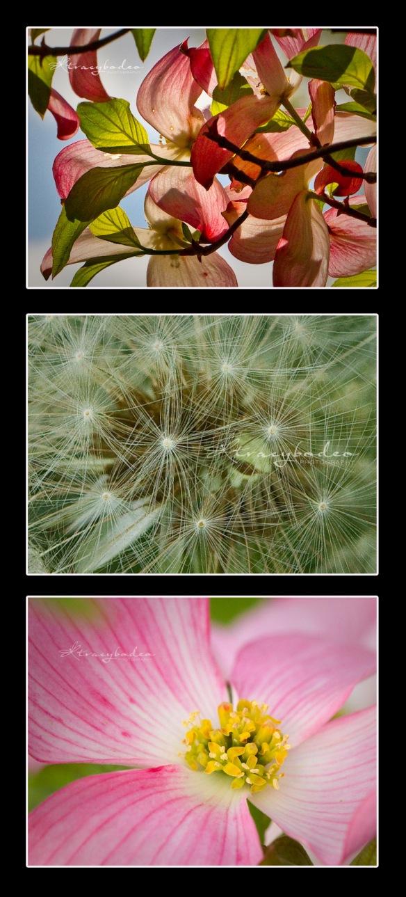 LMPcol-Flowers1 copy