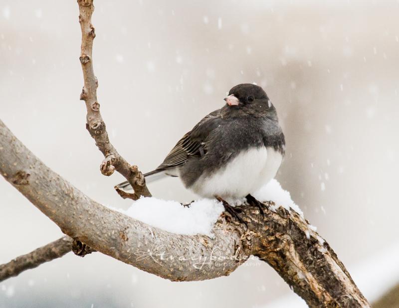 Snow-071--tbp